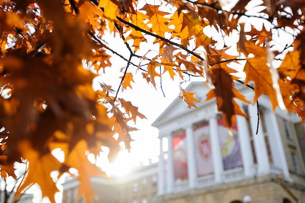 Oak leaves and Bascom Hall